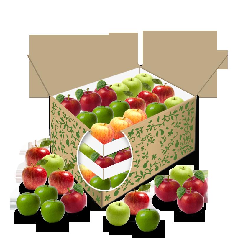 Teambox Apfel