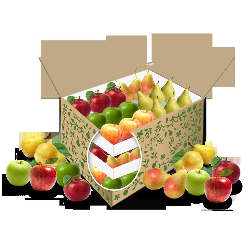 Teambox Apfel + Birne